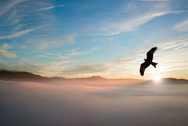 adelaar-hulp-van-boven